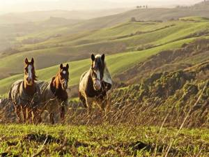 Horse riding tour in Tuscany
