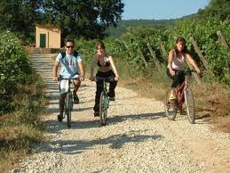 Mountain Bike tours next the vineyard
