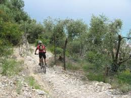 mountain bike sulle strade bianche tra gli ulivi in Toscana